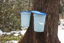 new sap buckets