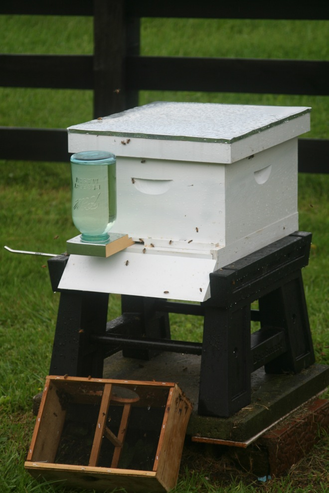 photo of a beehive with a Boardman feeder
