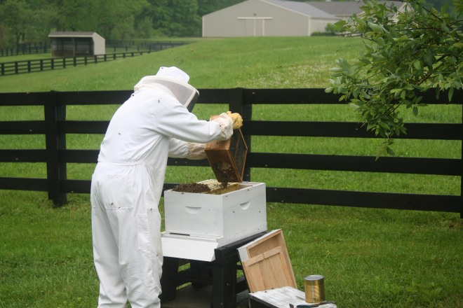 photo of a beekeeper hiving honeybees