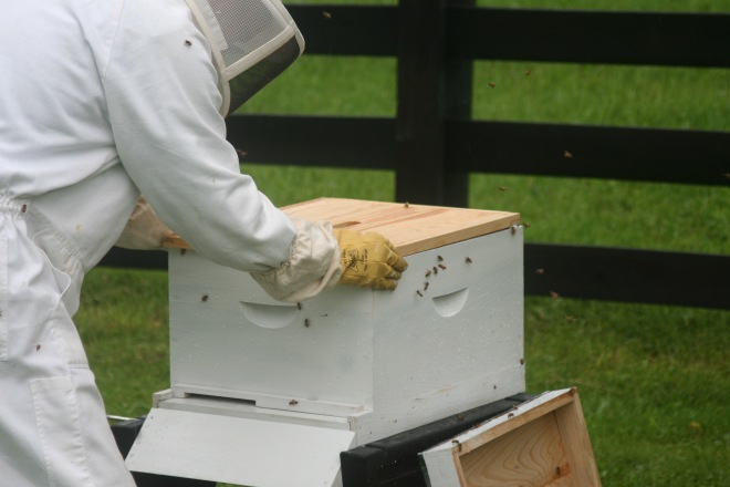 photo of a beekeeper closing a hive