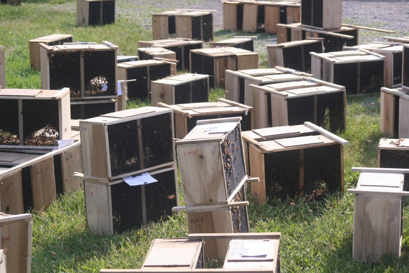 photo of boxes of honeybees