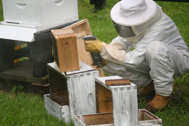 photo of a beekeeper spraying honeybees with sugar water to calm them