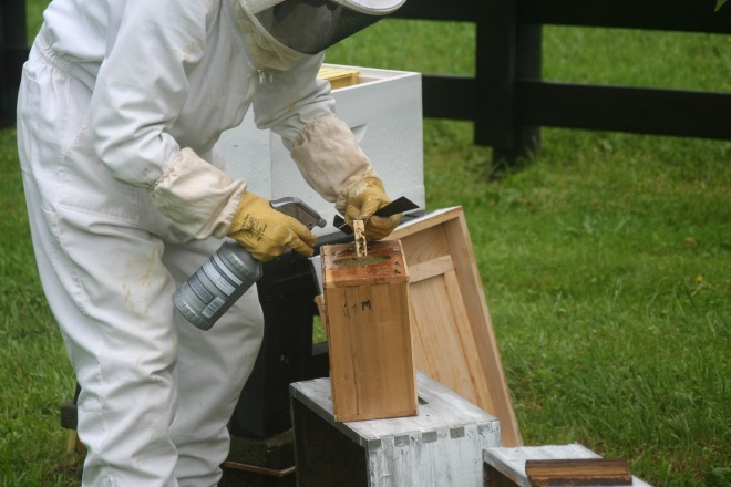 photo of a beekeeper removing the queen cage from a shipment of honeybees