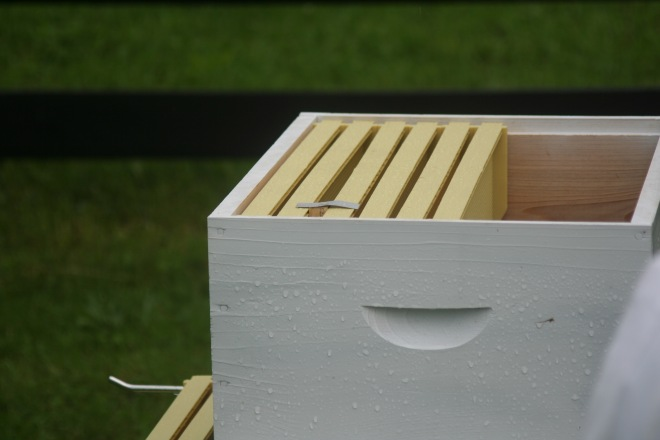 photo of the queen cage hanging in the frames of a beehive