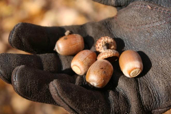 projects&promises|acorns