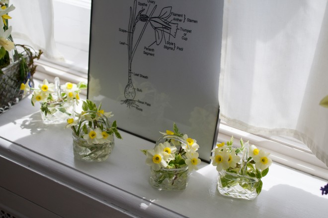 tiny daffodils in crystal baskets, on a windowsill