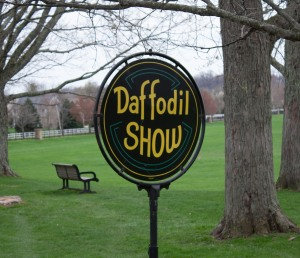 Daffodil_show-24
