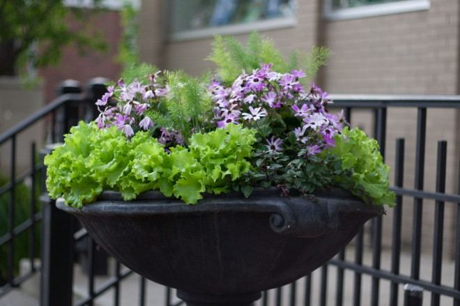 decorative planter with lettuce leaves