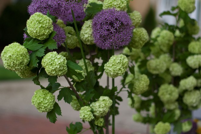 hydrangeas and alliums