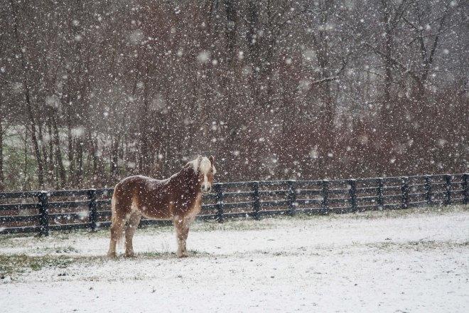 First_snow-1